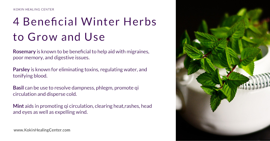 4 Beneficial Winter Herbs to Grow and Use!